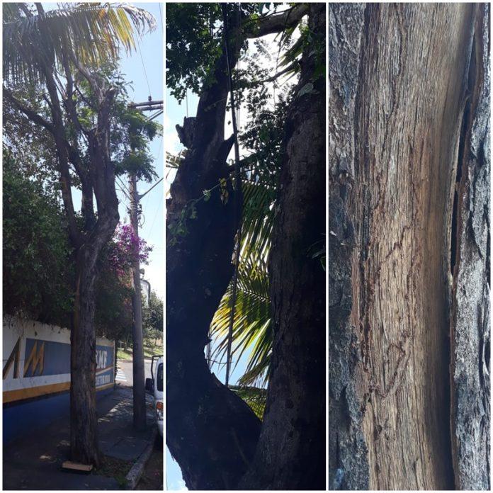 Árvore oferece perigo